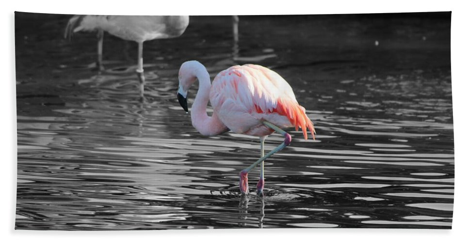 Palm Desert California Beach Towel featuring the photograph Pinky by Colleen Cornelius