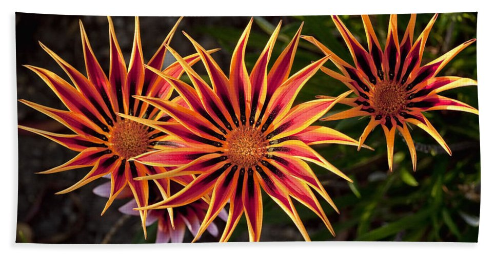 Flowers Beach Towel featuring the photograph Pinwheels by Kelley King