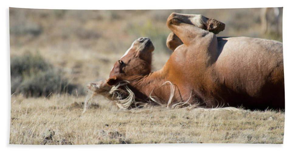 Cody Beach Towel featuring the photograph Please Scratch My Tummy by Frank Madia