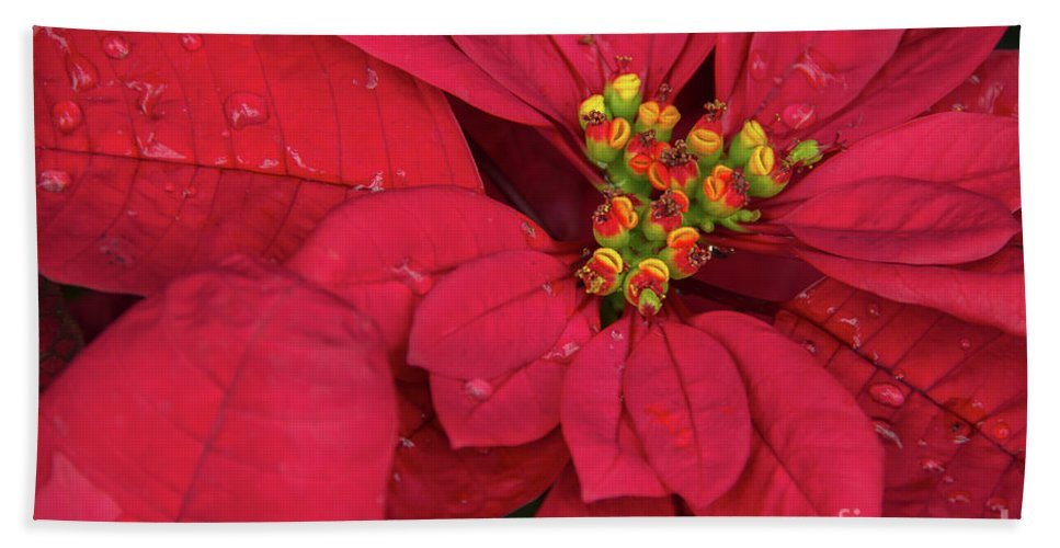 Poinsettia Beach Towel For Sale By Linda Joyce