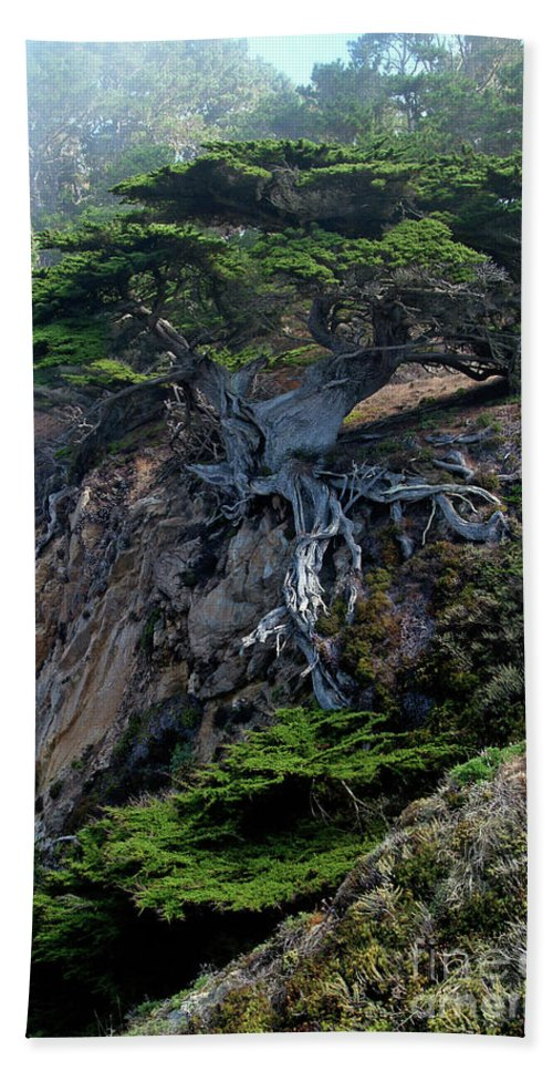 Landscape Beach Towel featuring the photograph Point Lobos Veteran Cypress Tree by Charlene Mitchell