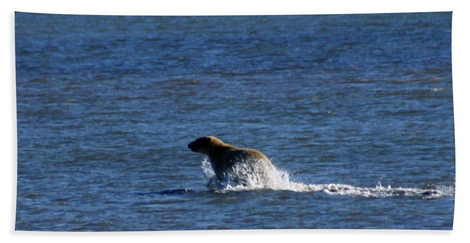 Bear Beach Sheet featuring the photograph Polar Bear by Anthony Jones