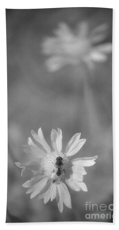 Pollinate Beach Sheet featuring the photograph Pollination by Richard Rizzo
