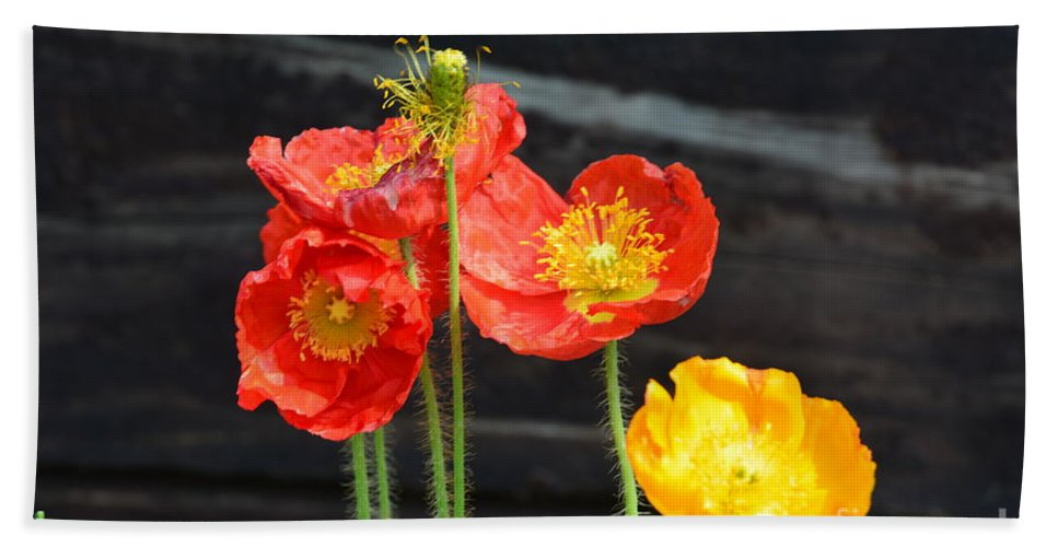 Poppies 17-01 Beach Towel featuring the photograph Poppies 17-01 by Maria Urso