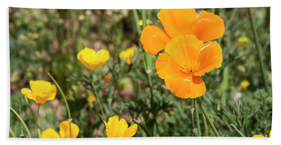 Desert Beach Towel featuring the photograph Poppies in Bloom by Kathy McClure