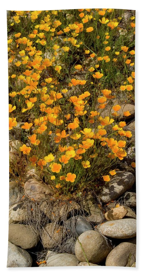 Poppy Beach Towel featuring the photograph Poppies On The Rocks by Jim And Emily Bush