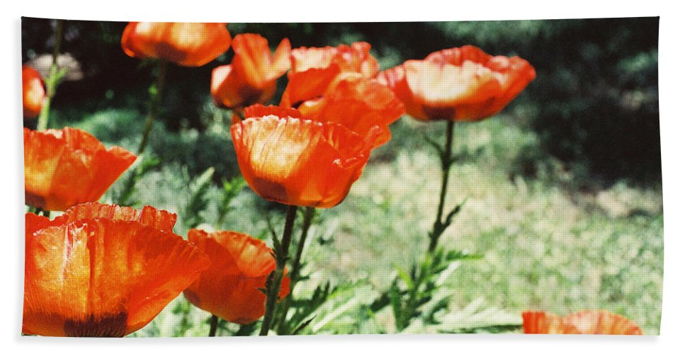 Flowers Beach Towel featuring the photograph Poppies by Ric Bascobert