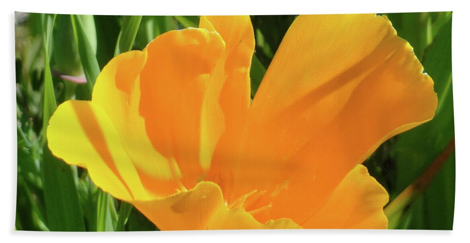 Poppy Beach Towel featuring the photograph Poppy by Shannon Grissom