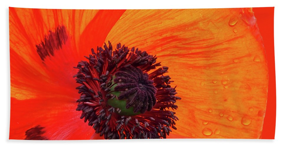 Single Red Poppy Beach Towel featuring the photograph Poppy With Raindrops 2 by Gill Billington