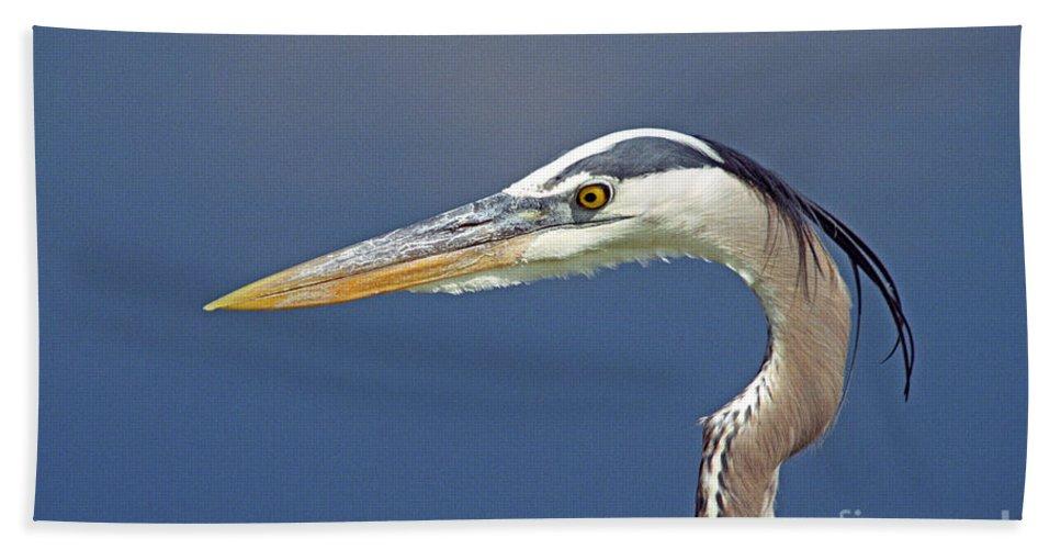 Bird Beach Towel featuring the photograph Portrait Of A Great Blue Heron by John Harmon