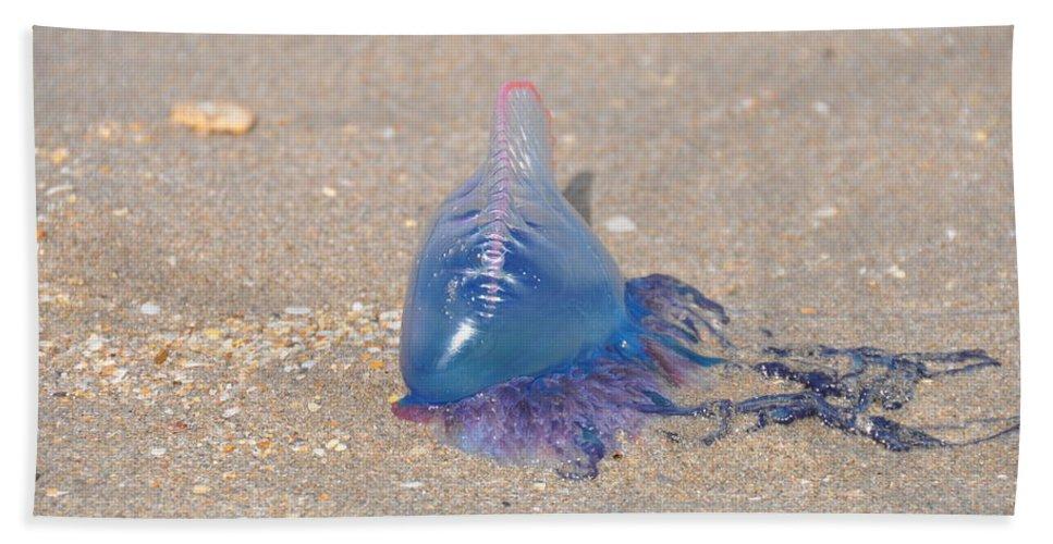 Jellyfish Beach Towel featuring the photograph Portugese Man O' War 2 by Rich Bodane