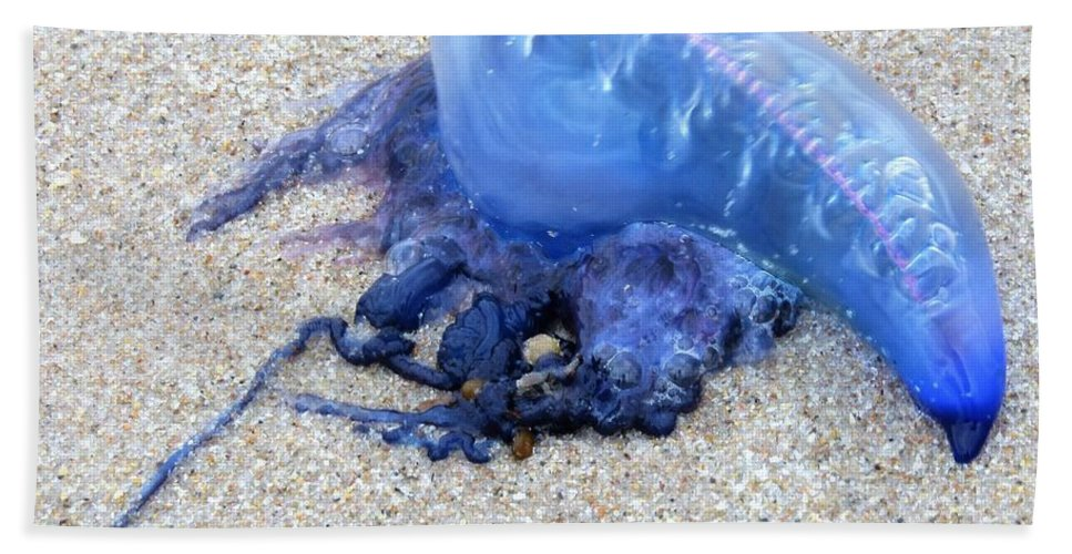 Physalia Physalis Beach Towel featuring the photograph Portuguese Man Of War by Judith L Schade