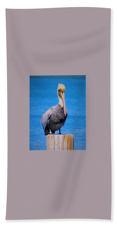 Pelican Beach Towel featuring the photograph Posted Pelican by Judith L Schade
