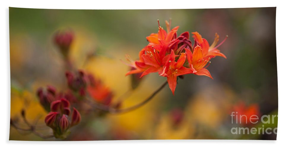 Rhodies Beach Towel featuring the photograph Potential by Mike Reid