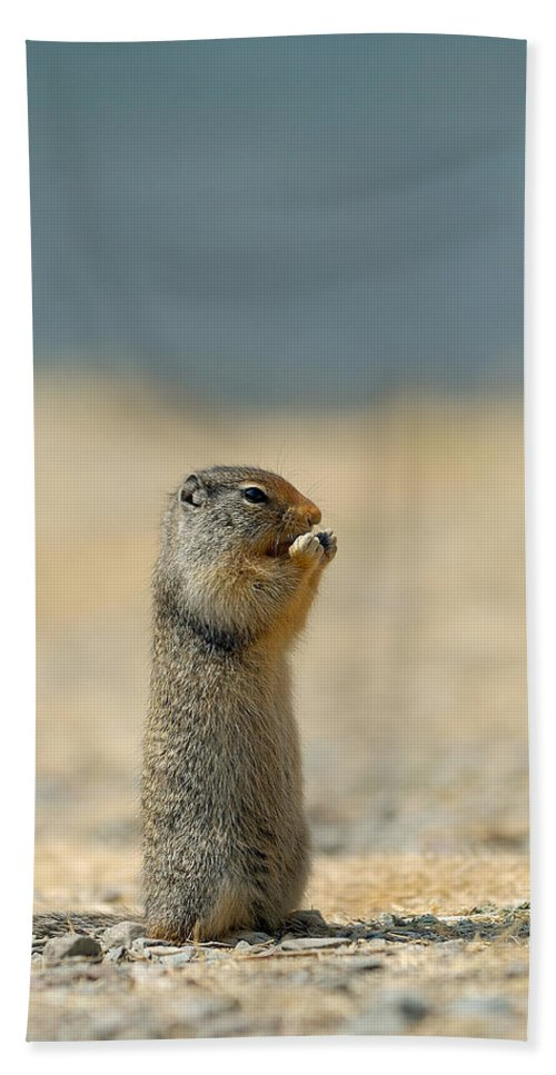 Prairie Dog Beach Towel featuring the photograph Prairie Dog by Sebastian Musial