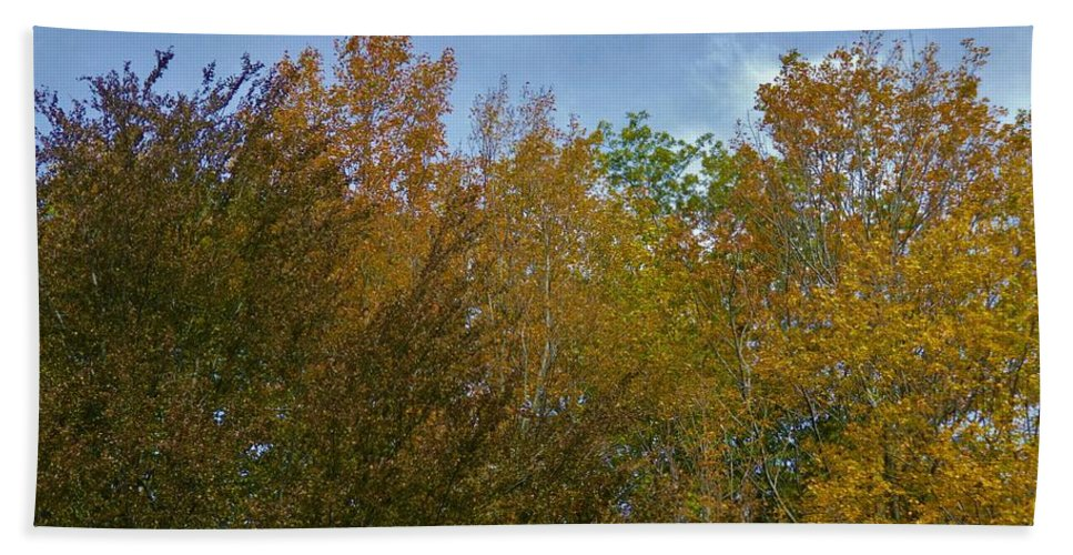 Autumn Leaves Trees Spencer Gorge Yellow Golden Gold Ontario Beach Towel featuring the photograph Praiseworthy Palate by The Sangsters