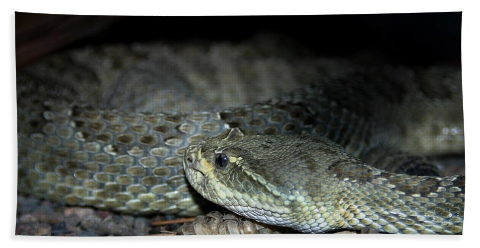 Snake Beach Towel featuring the photograph Prarie Rattle Snake by Anthony Jones