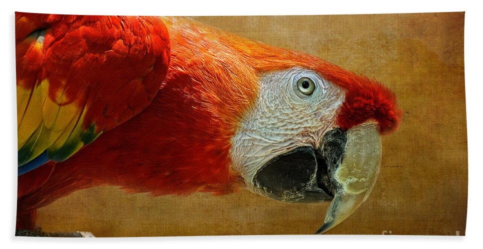 Parrot Beach Towel featuring the photograph Pretty Boy by Lois Bryan