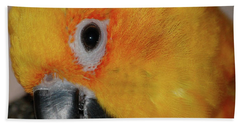 Bird Beach Towel featuring the digital art Pretty Girl by DigiArt Diaries by Vicky B Fuller