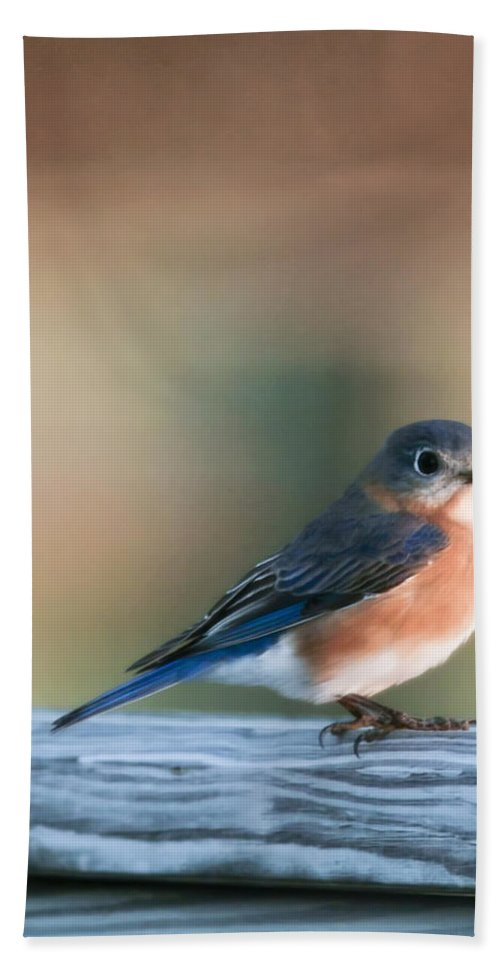 Bird Beach Towel featuring the photograph Pretty In Blue by Phill Doherty