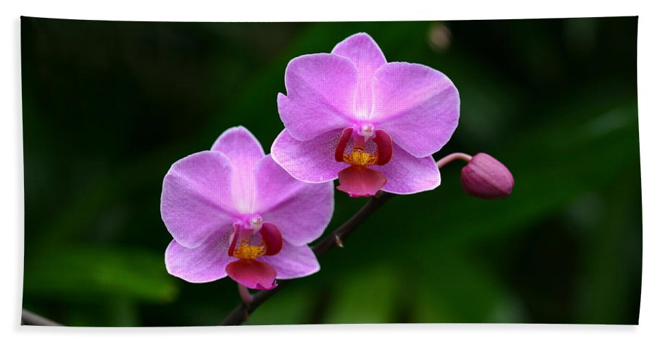 Orchid Pink Purple Plant Green Photography Photograph Beach Towel featuring the photograph Pretty Pink And Proud by Shari Jardina