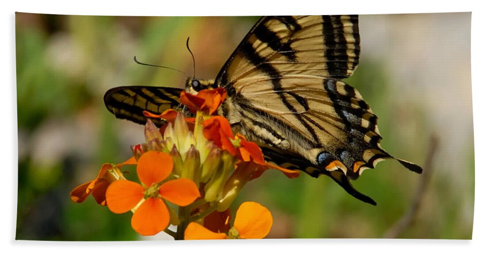 Swallowtail Beach Towel featuring the photograph Pretty Swallowtail by David Lee Thompson