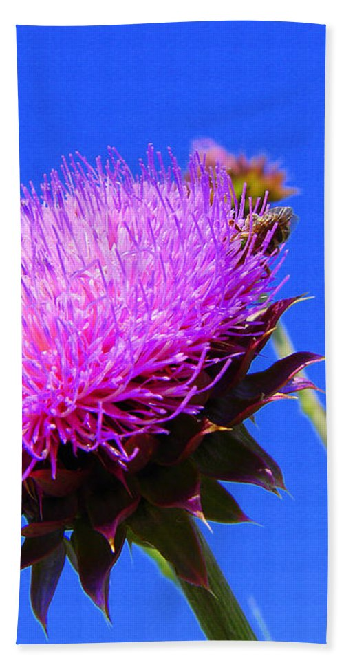 Thistle Bloom Beach Towel featuring the photograph Pretty Weed by J R  Seymour