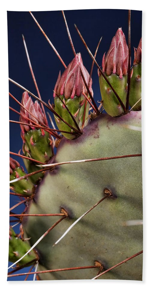 Prickly Pear Beach Towel featuring the photograph Prickly Buds by Kelley King