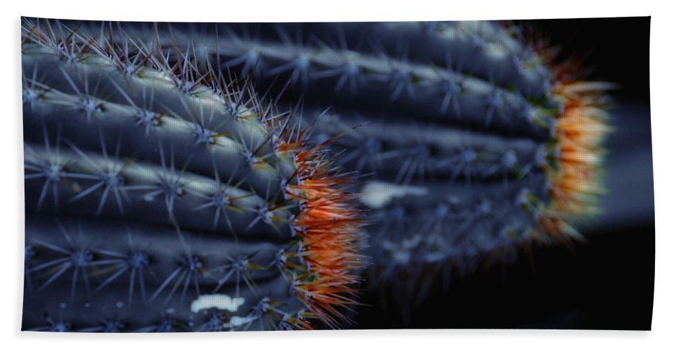 Cactus Beach Towel featuring the photograph Prickly Hooters by Donna Blackhall