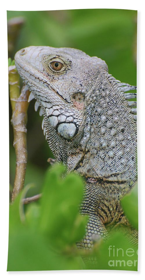 Iguana Beach Towel featuring the photograph Profile Of A Gray Iguana In The Top Of A Bush by DejaVu Designs