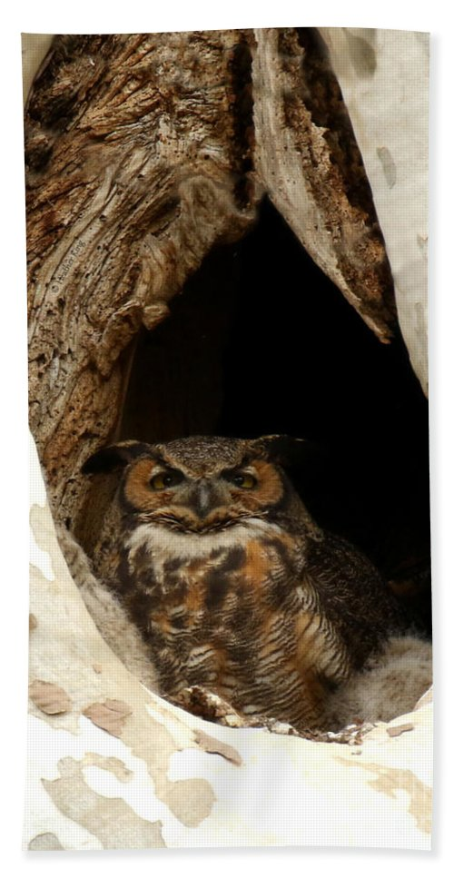 Great Horned Owl Beach Towel featuring the photograph Protective Mom by Heather King