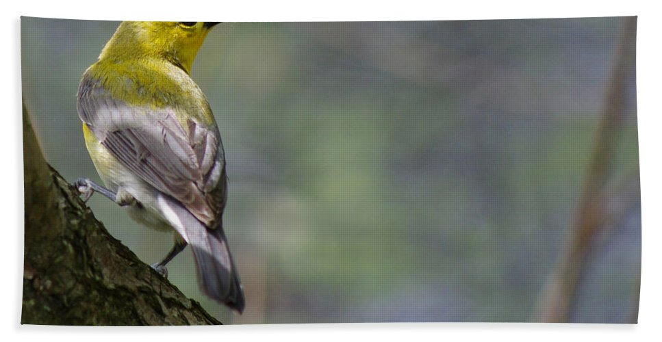 Prothonotary Beach Towel featuring the photograph Prothonotary Warbler by Jenny Gandert