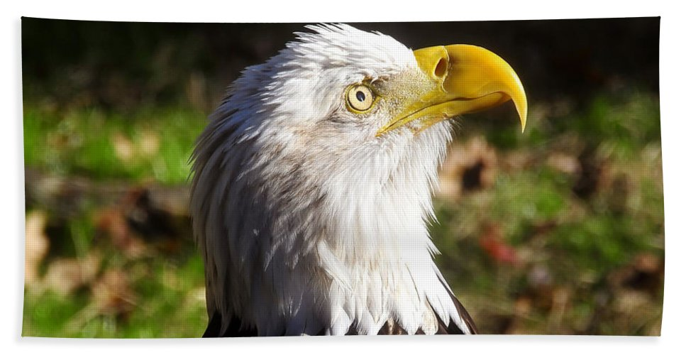 American Bald Eagle Beach Towel featuring the photograph Proud Eagle by David Lee Thompson