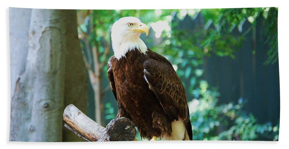 Wildlife Beach Towel featuring the photograph Proud Eagle by Eric Liller
