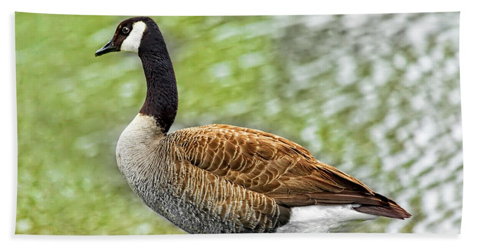 Goose Beach Towel featuring the photograph Proud Goose by Kay Brewer