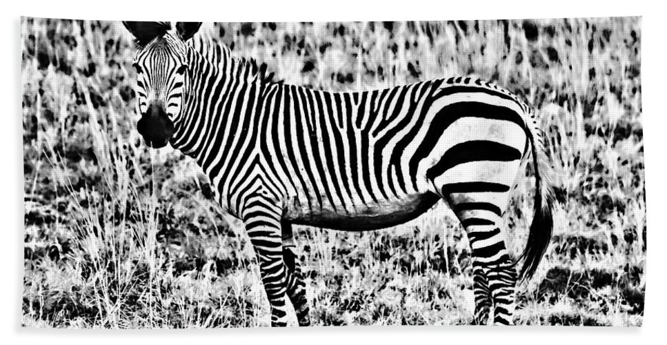 Africa Beach Towel featuring the photograph Punda Milia 2 by Douglas Barnard
