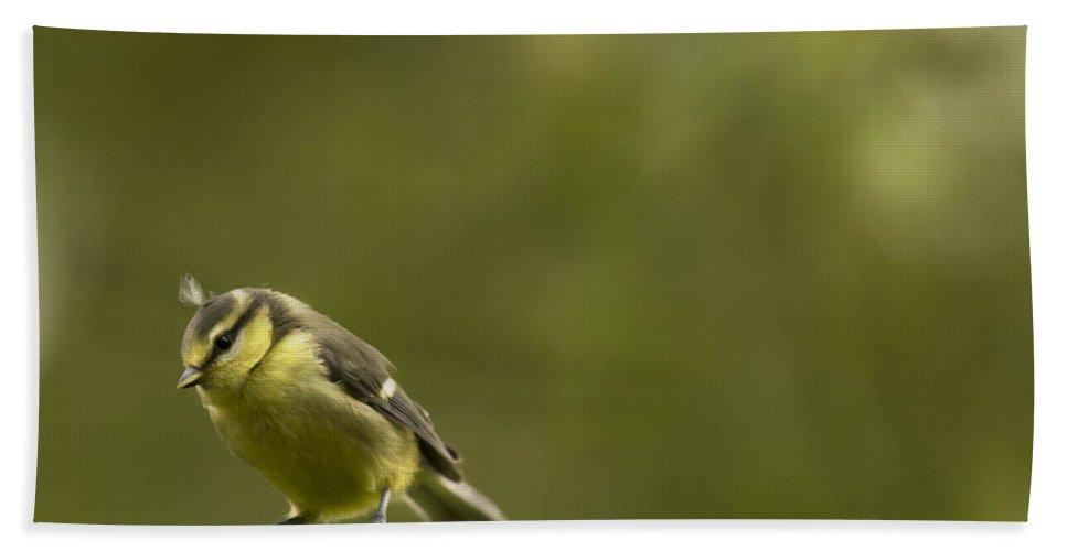 Blue Tit Beach Towel featuring the photograph Punk Tit by Angel Ciesniarska
