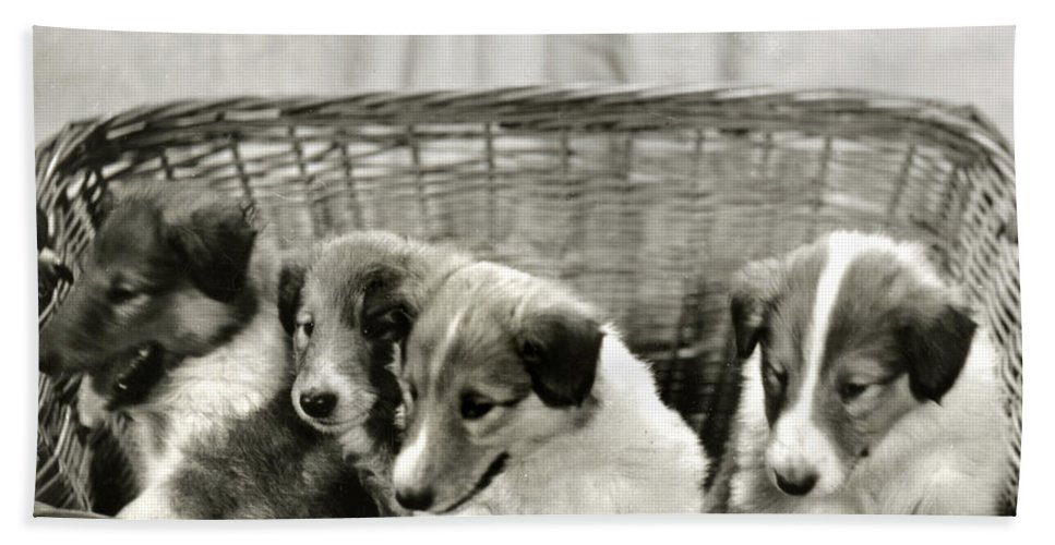 Vintage Beach Towel featuring the photograph Puppies Of The Past by Marilyn Hunt