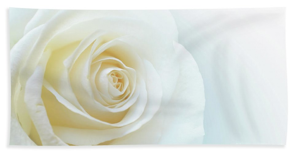 Rose Beach Towel featuring the photograph Pure White Rose by Carlos Caetano