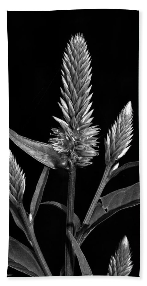 Flower Beach Towel featuring the photograph Purple - B-w by Christopher Holmes