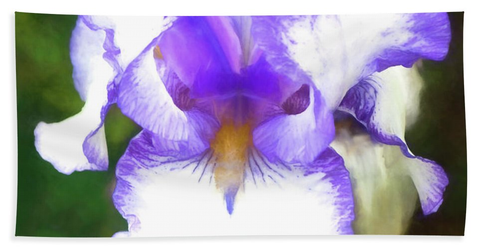 Iris Beach Towel featuring the photograph Purple And White Iris by Jim And Emily Bush