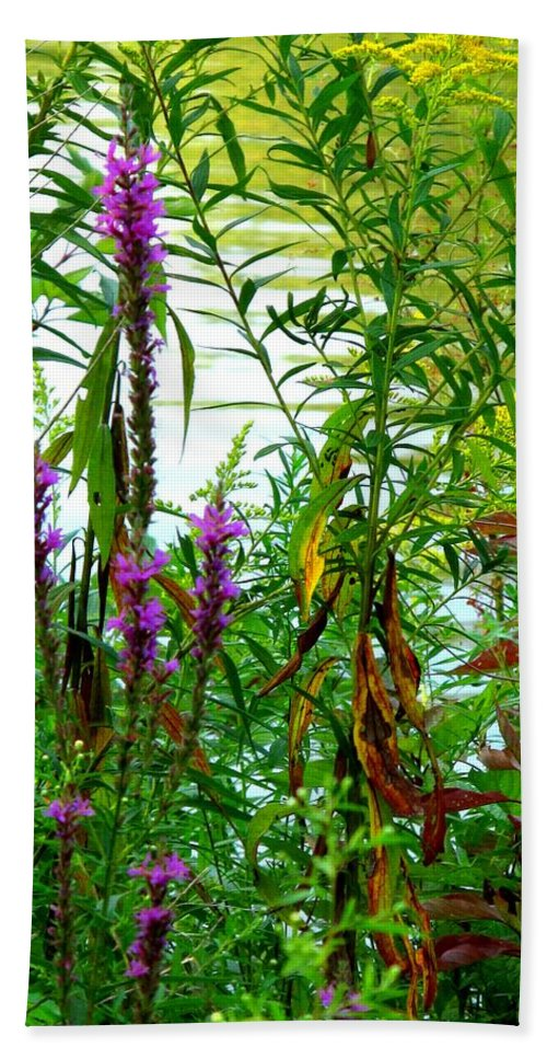 Purple Beach Towel featuring the photograph Purple And Yellow by Ian MacDonald