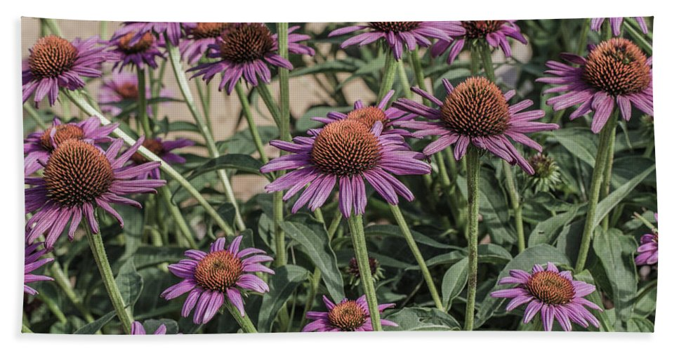 Flower Beach Towel featuring the photograph Purple Blooms by Peter Bouman