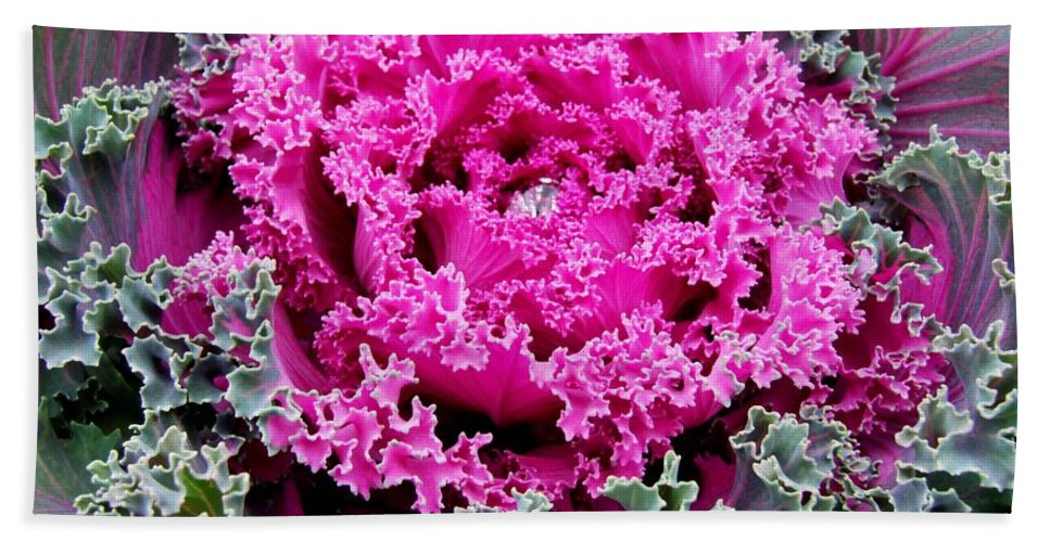 Purple Beach Towel featuring the photograph Purple Cabbage by Michiale Schneider