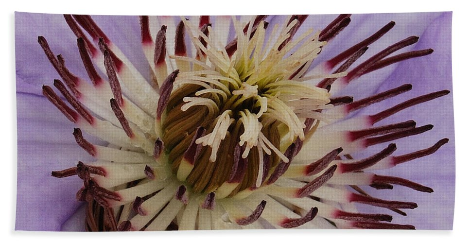 Clematis Beach Towel featuring the photograph Purple Clematis by Michael Peychich
