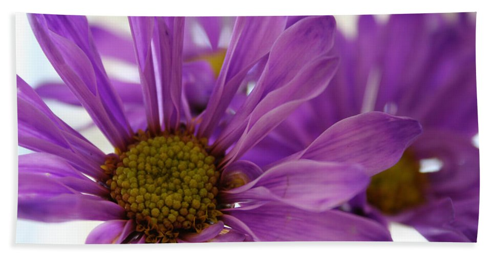 Flowers Purple Macro Daisy Spring Yellow Digital Photography Beach Towel featuring the photograph Purple Delight by Linda Sannuti