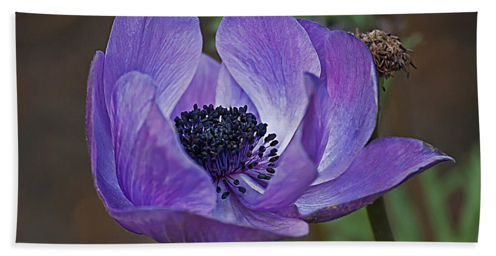 Purple Beach Towel featuring the photograph Purple by Emerald Studio Photography