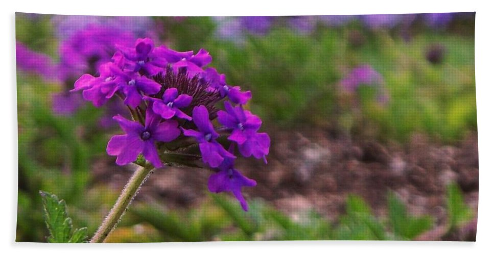 Purple Beach Towel featuring the painting Purple Flower by Eric Schiabor