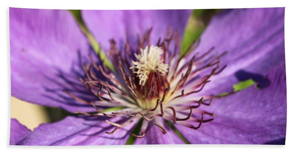 Purple Beach Towel featuring the photograph Purple Flower by Lauri Novak