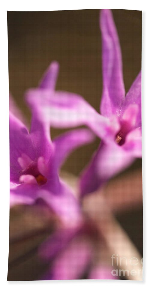 Society Garlic Beach Towel featuring the photograph Purple Garlic by Brooke Roby